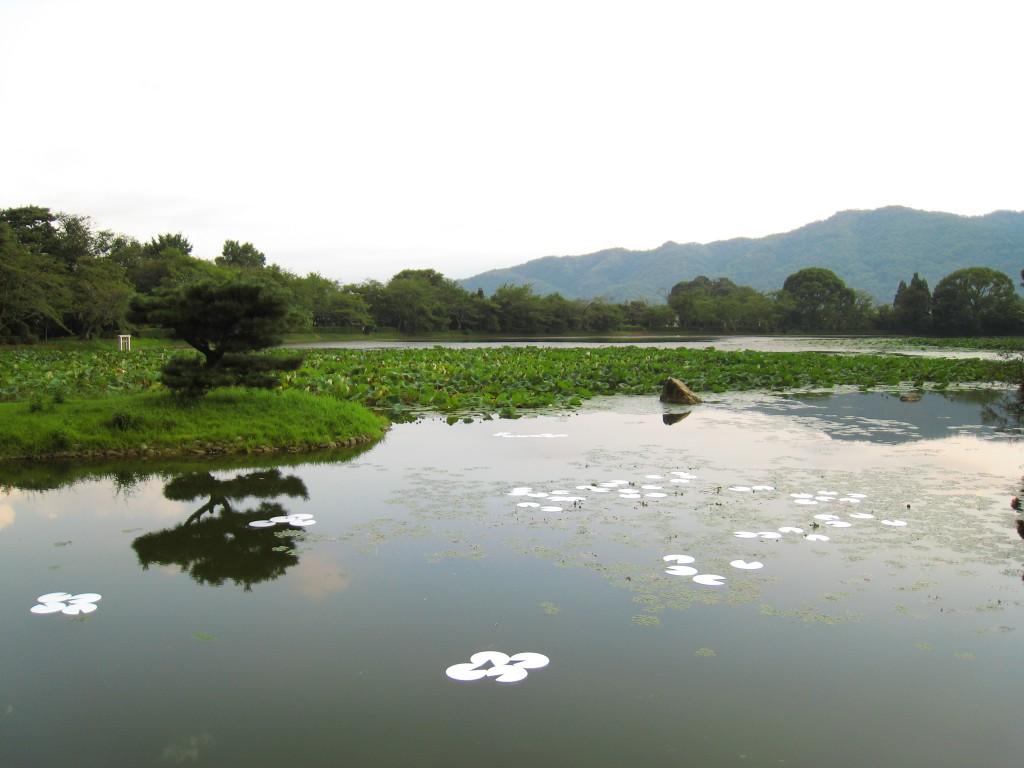 空の睡蓮 2007年 大覚寺・京都